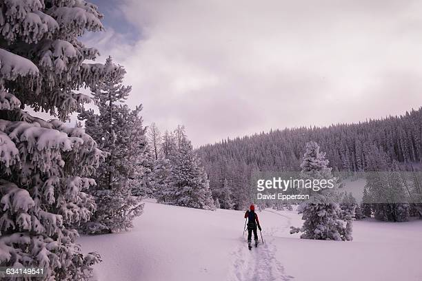 woman backcountry skiing in colorad - steamboat springs colorado - fotografias e filmes do acervo