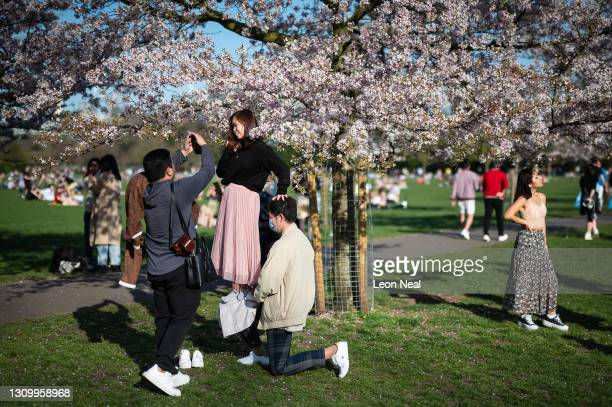 Woman balances on a friends knee in order to be high enough to pose for photographs beneath the blossom in Battersea Park on March 30, 2021 in...