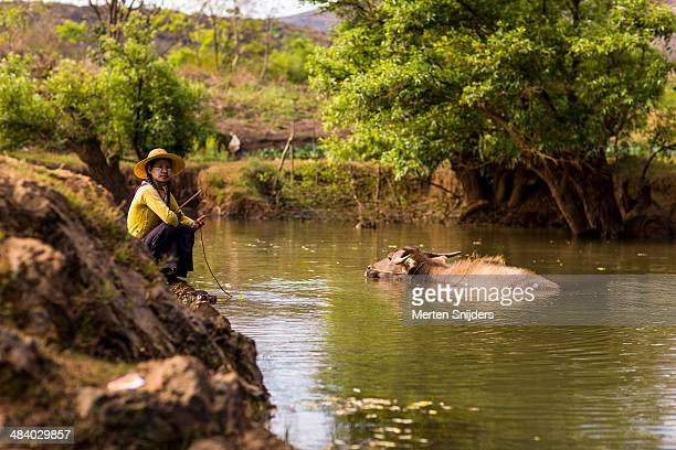 woman bathing a water buffalo - merten snijders stock pictures, royalty-free photos & images