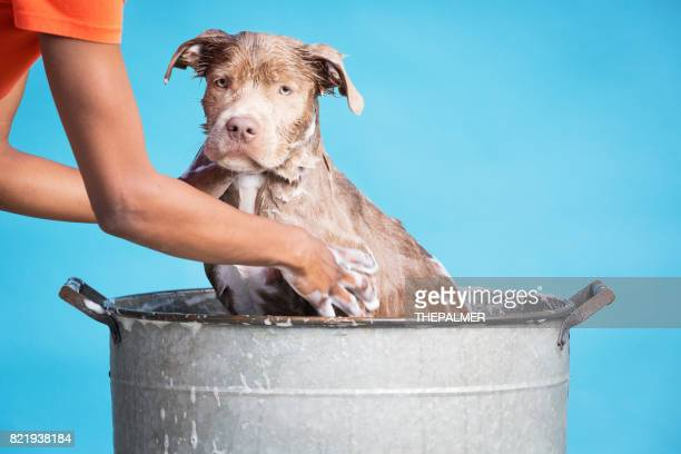 Woman bathing her dog