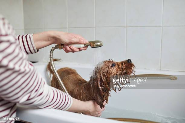 Woman bathing her puppy