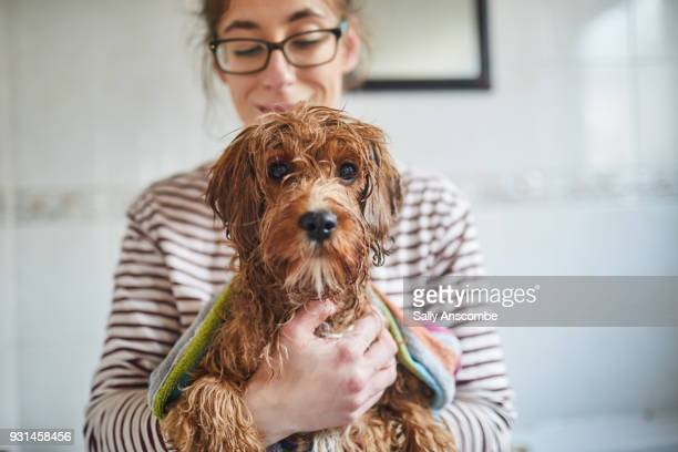woman bathing her puppy - nass stock-fotos und bilder