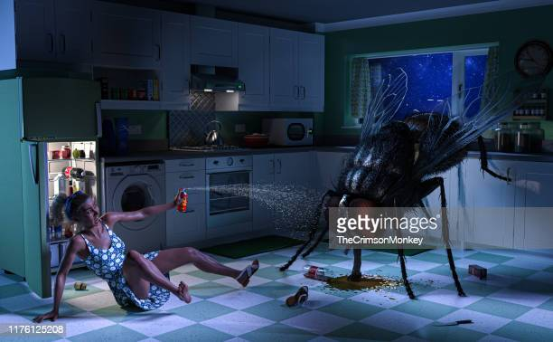 woman battles giant fly in kitchen - insetto foto e immagini stock