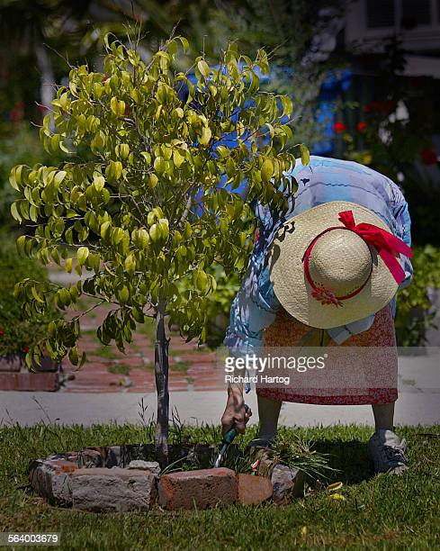 A woman becomes part of a graphic image as she tends to her garden along Moorpark Street Monday afternoon in Sherman Oaks