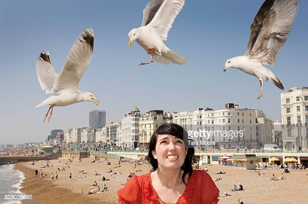 woman being pestered by gulls - seagull stock pictures, royalty-free photos & images