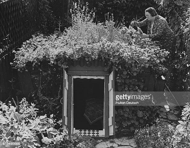 A woman beside the air raid shelter she has built in her allotment As well as providing her with protection from raids she has also grown her own...