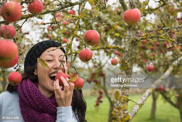 Woman biting an apple which still hanging on a tree in an apple orchard, Bavaria, Germany