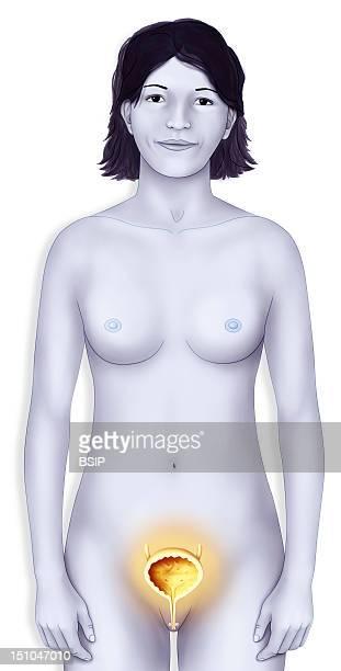 Woman Bladder