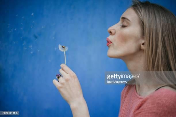 woman blowing dandelion on the background of blue wall - soffiare foto e immagini stock