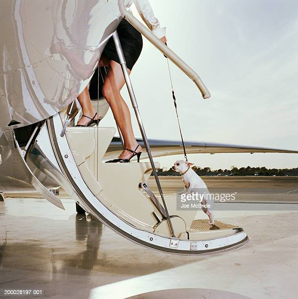 Woman boarding steps of corporate jet, pulling Chihuahua on leash