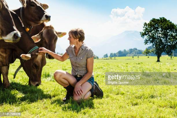 woman bonding with herd of cows on field, sonthofen, bayern, germany - 家畜 ストックフォトと画像