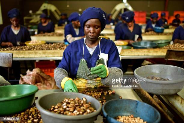 Woman breaks raw cashew nuts at a cashew nuts processing factory in the central Ivorian city of Bouake on May 24, 2018.