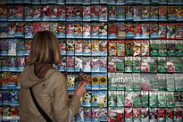 Woman browses seed packets on display in a stall on the press preview day of the Chelsea Flower Show on May 18, 2015 in London, England. The show,...