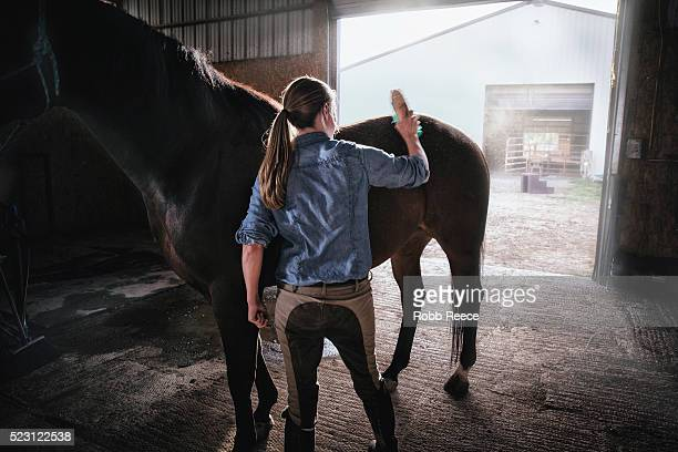a woman brushes her horse standing in doorway of stable - robb reece stockfoto's en -beelden