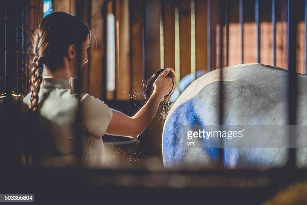 Woman brushing a horse in a barn