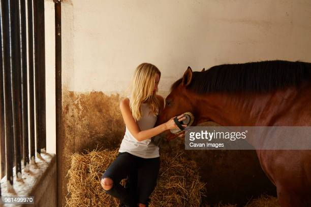 Woman brushing brown horse in stable