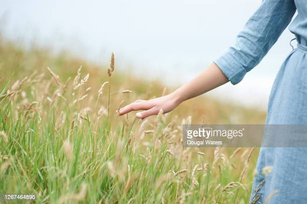 woman brushing hand over long summer grasses in countryside, close up. - gras stock pictures, royalty-free photos & images