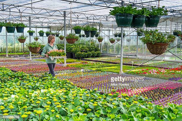 Woman buying plants from Nursery