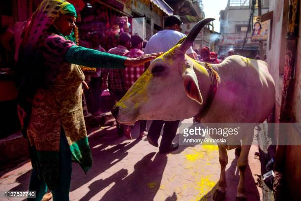 A woman caresses a cow on a street on March 20 2019 in Vrindavan India