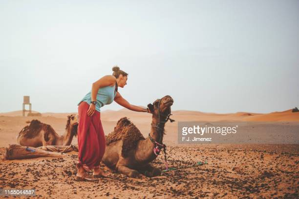 woman caressing a camel in the merzouga desert - femme touareg photos et images de collection