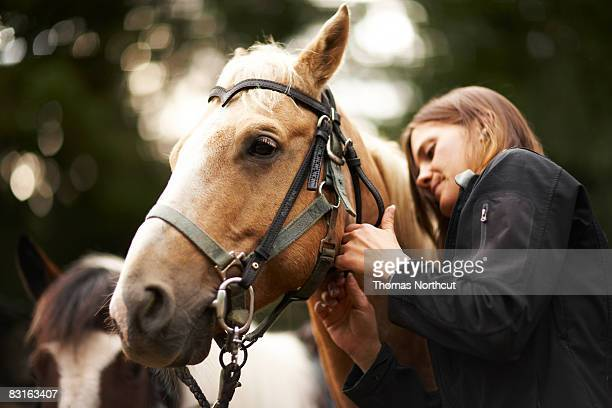 femme prenant soin de cheval. - equestrian animal photos et images de collection