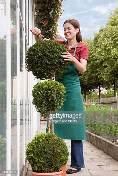 woman caring for plant - トピアリー ストックフォトと画像