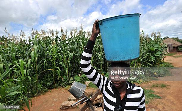 MARAWANYIKA A woman carries a bucket on her head next to maize crops on a small scale farm in Chinhamora about 50 km north of Harare on February 10...