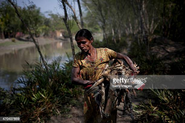 A woman carries firewood from the Sundarbans mangrove forest February 18 2014 in Bodomari village Khulna Division Bangladesh The Rampal Power plant a...