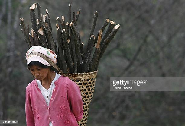 A woman carries firewood home in a village on March 17 2006 in Panwa Kachin State Special Region 1 of Kachin State Myanmar The Kachin State Special...