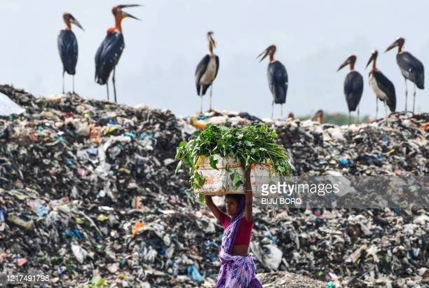 TOPSHOT A woman carries food for her cattle past storks standing atop of one of the largest disposal sites in northeast India at the Boragaon area of...