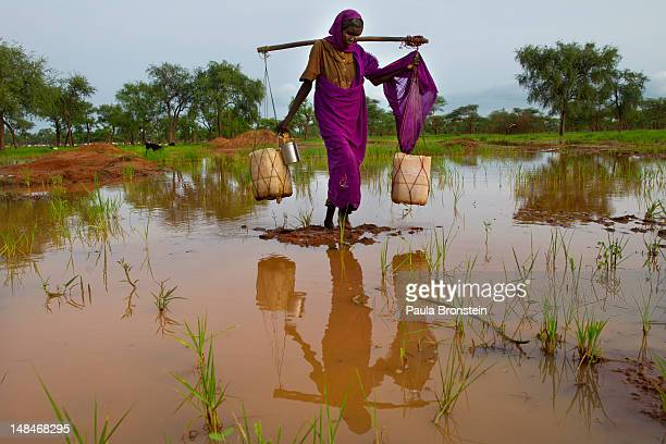 Woman carries heavy jugs of water through a muddy pond where she filled the plastic containers July 17, 2012 in Jamam refugee camp, South Sudan. Up...