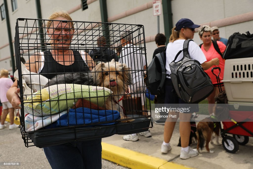 A woman carries her dog as people arrive at a shelter at Alico Arena where thousands of Floridians are hoping to ride out Hurricane Irma on September 9, 2017 in Fort Myers, Florida. The Fort Myers area could begin to feel hurricane-force winds from Irma by 11 a.m. Sunday and experience wind gusts over 100 mph from Sunday through Monday.