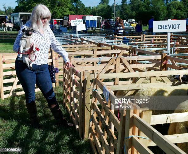 A woman carries her pug dog as she helps to direct sheep into their pens during 152nd the Ryedale Country Show on July 31 2018 in Kirbymoorside...