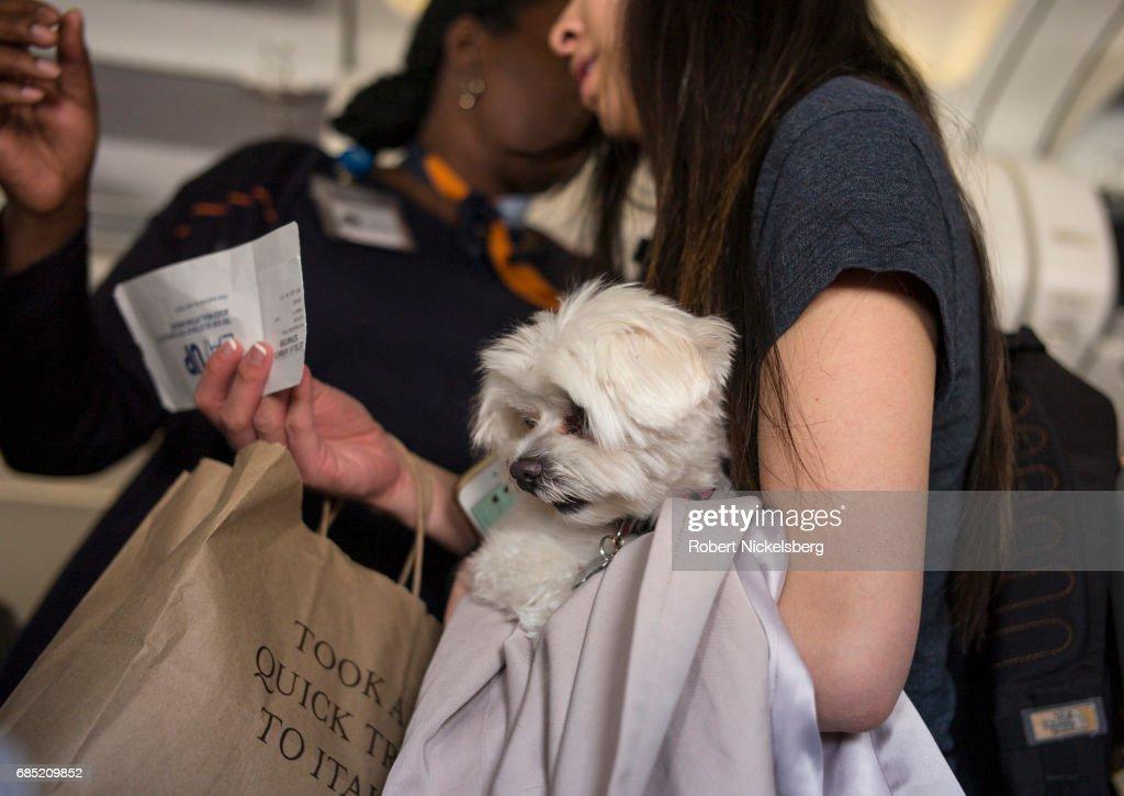 Pets On Board A JetBlue Flght : News Photo