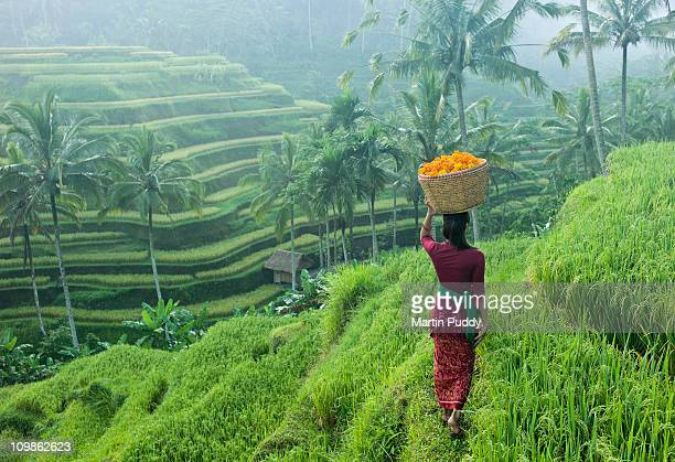 woman carrying basket of flowers - indonesien stock-fotos und bilder