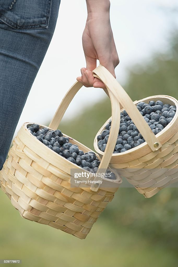 Woman carrying baskets of blueberries : Foto de stock