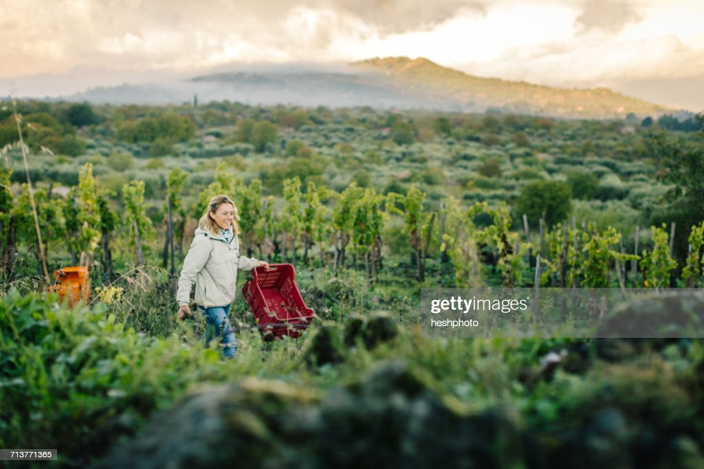 Woman carrying crate in vineyard : Stock Photo