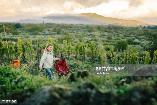 woman carrying crate in vineyard - heshphoto photos et images de collection