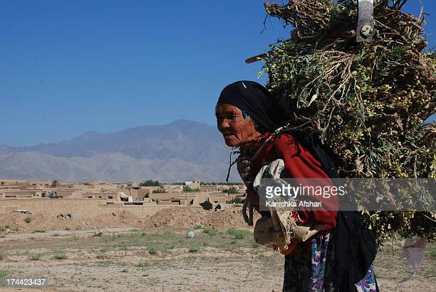 Carrying firewood in Afghanistan