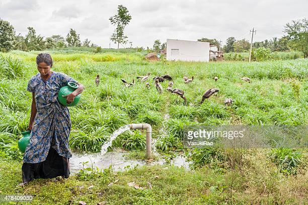 woman carrying water in kokrebellur, karnataka, india - karnataka stock pictures, royalty-free photos & images