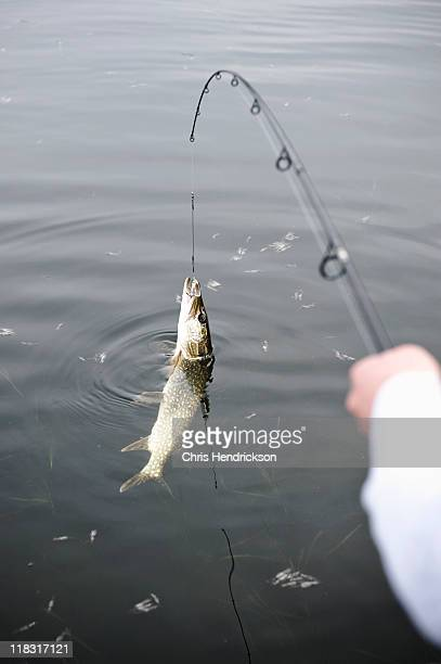 Woman catches a Northern Pike in a lake.