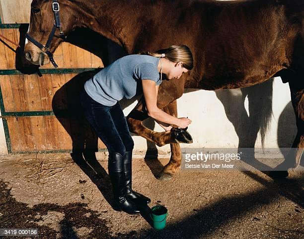 woman changing horseshoe - cavalo família do cavalo - fotografias e filmes do acervo