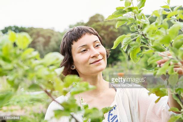 Woman checking fruit tree in allotment.