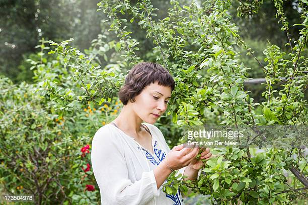 woman checking fruittrees in allotment. - examining stock pictures, royalty-free photos & images