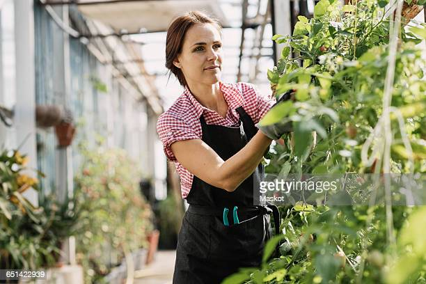 Woman checking plants in greenhouse