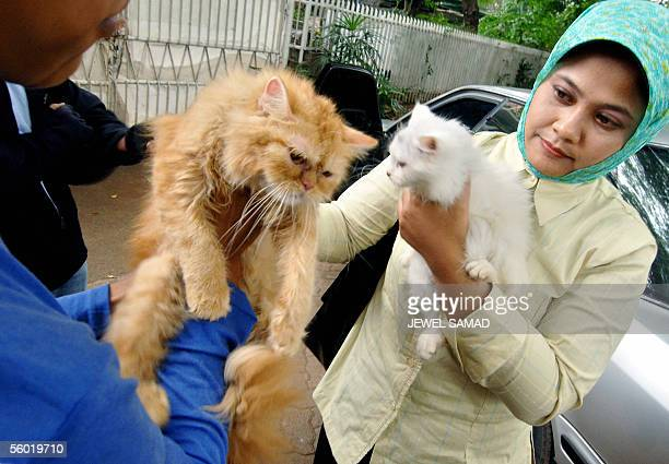 A woman checks cats before buying them from a street side pet stall in Jakarta 27 October 2005 Indonesia's human bird flu outbreak is puzzling...