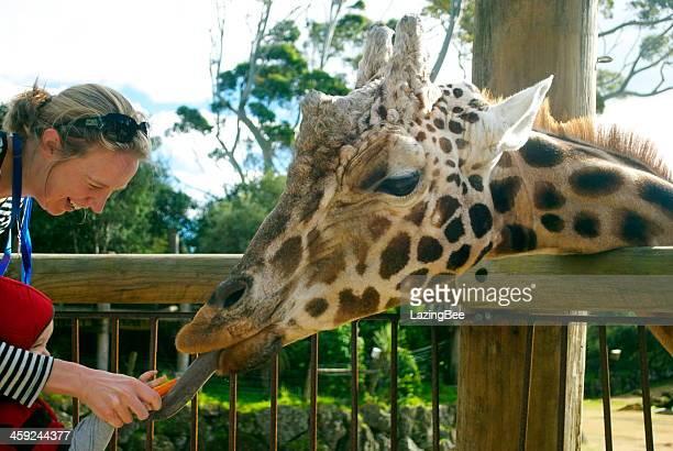 Woman & Child feed Giraffe, Auckland Zoo, NZ