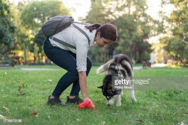 woman cleaning after her dog in the park - picking up stock pictures, royalty-free photos & images