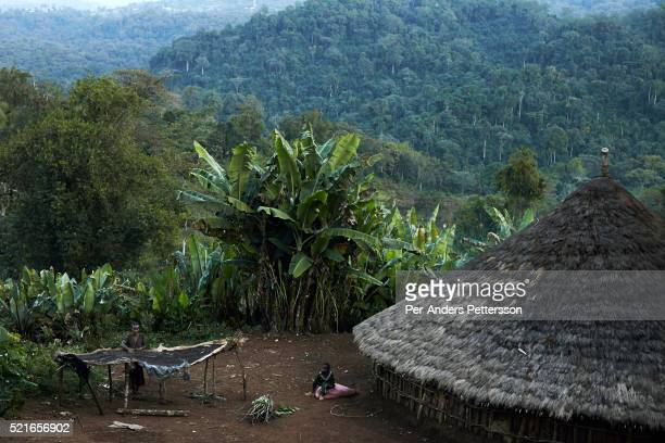 A woman cleaning coffee beans outside her house in a traditional village on December 5 2012 outside Bonga Ethiopia The Kaffa region is known for its...