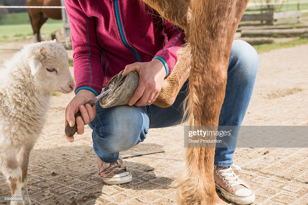 Woman cleaning horse's hoof, Bavaria, Germany : Stock Photo